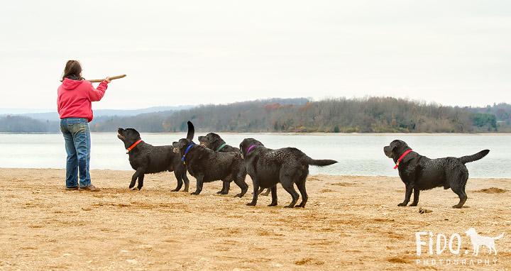 Blue Marsh Lake Dog Photo Shoot