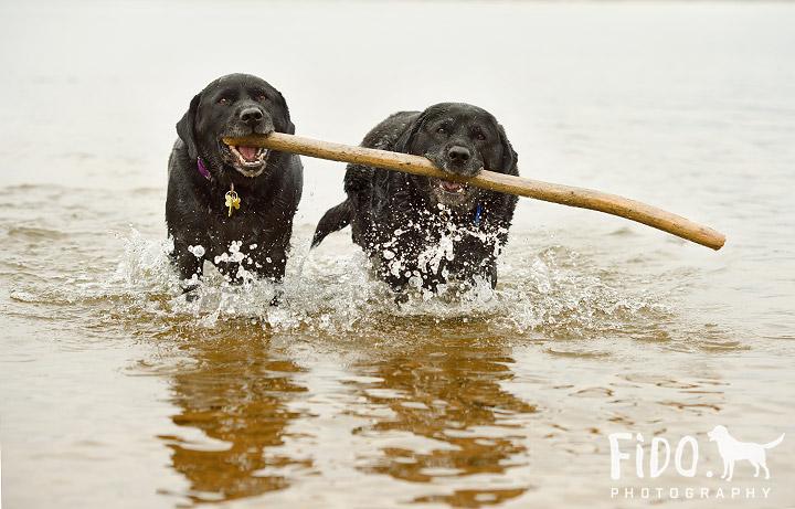 On-location-Philadelphia-dog-photography-labs