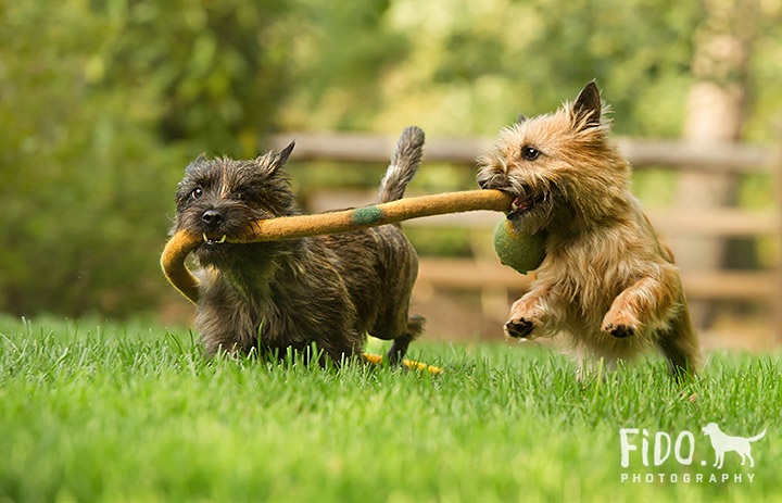 Delaware_Pet_Action_Photography