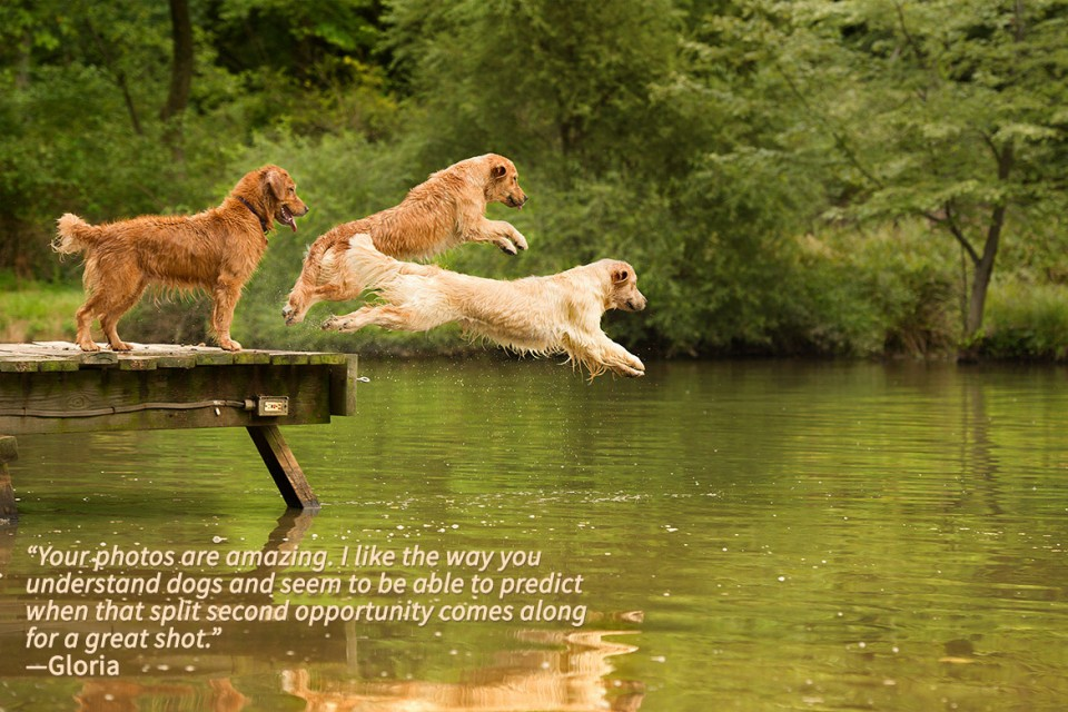 Philadelphia-pet-photography-dogs-jumping